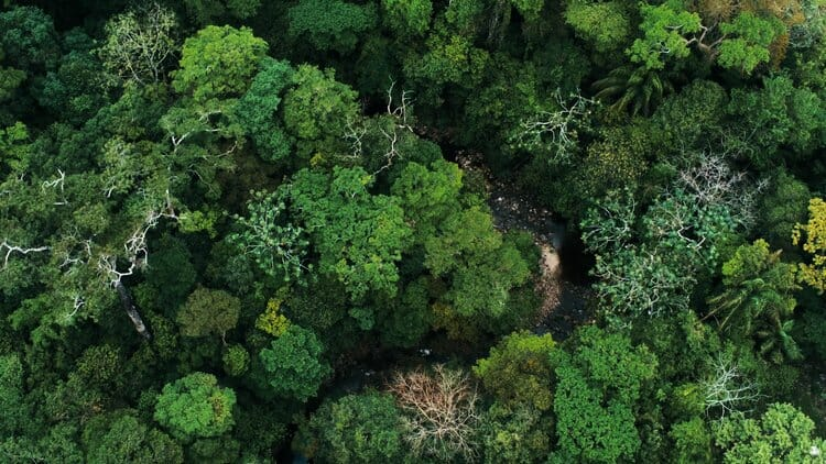 Aerial drone image of the rainforest and a small river at Amboro National Park, Bolivia